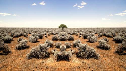 Barren Desert Plants Shrubs Horizon Rocky Sandy