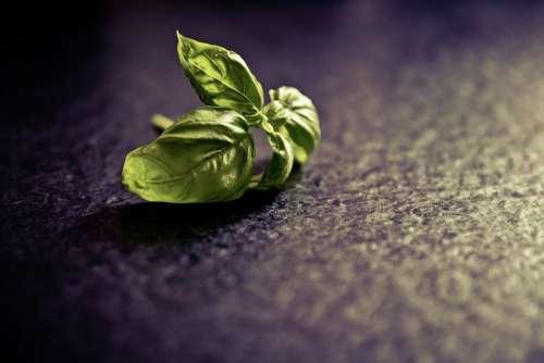 Basil Spice Plant Food Green Herbs Culinary Herbs