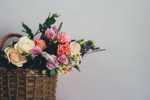 Basket Bloom Blossom Bouquet Decoration Flora