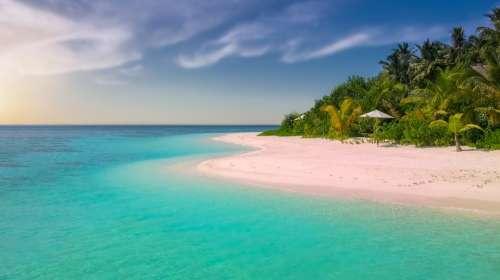 Beach Paradise Island Palm Trees Ocean Romantic