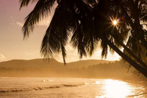 Beach Nature Ocean Palms Sea Seashore Sunrise
