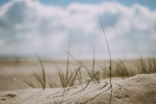 Beach Grass Outdoors Sand Sea Seashore
