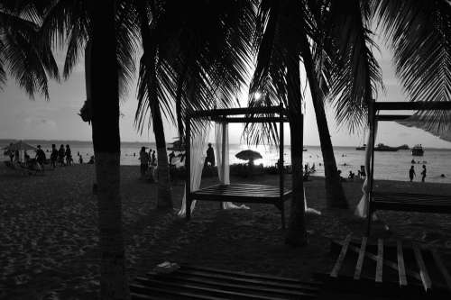 Beach Sunset Black And White Palms Mexico
