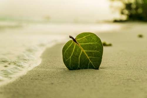 Beach Leaf Green Nature Summer Tropical Sand