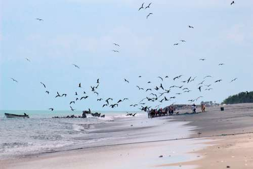 Beach Panama Pacific Sea Landscape Tourism Walk