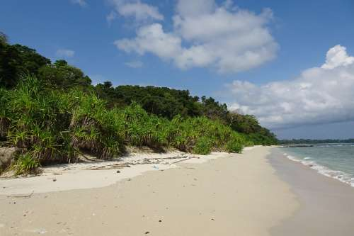 Beach Bay Vegetation Littoral Sea Island