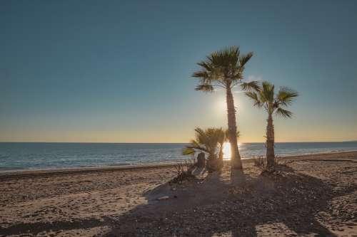 Beach Palm Tree Ocean Sunset Scenic Water