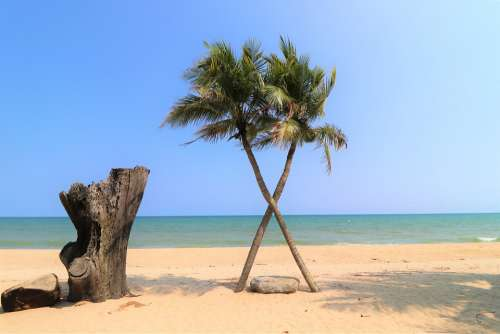 Beach Palm Trees More Crossbred Vacations Ocean