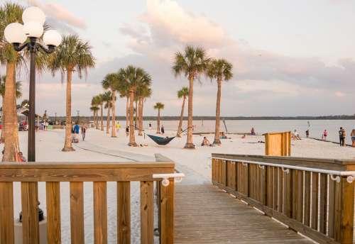 Beach Palm Trees Exotic Pine Island Florida Nature