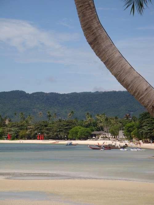 Beach Palm Sea Island Thailand South Sea