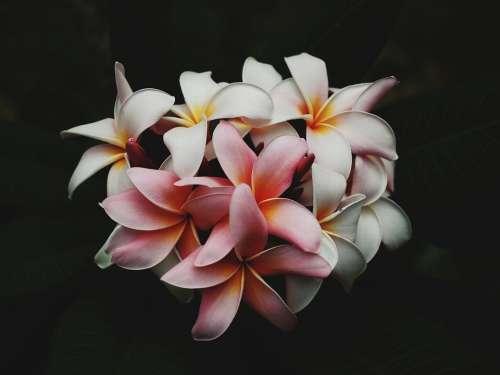 Beautiful Flowers Bloom Blooming Blossom Blur