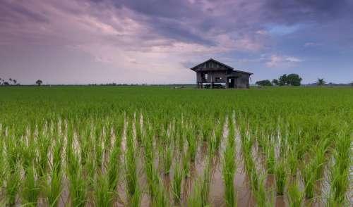 Beautiful Cottage Rice Field Landscape Vietnam