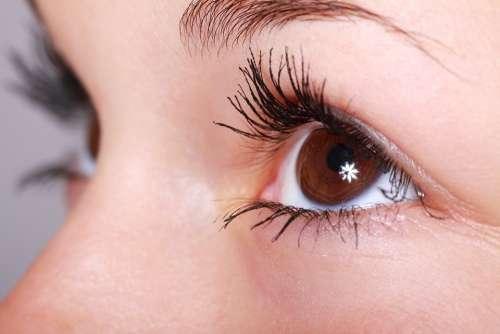 Beautiful Close-Up Eye Eyebrows Eyelashes Eyes