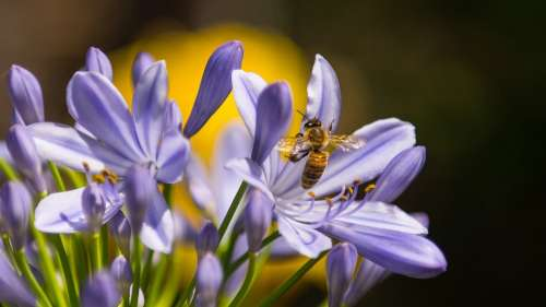 Bee Insect Purple Flower Wasp Spring Plant
