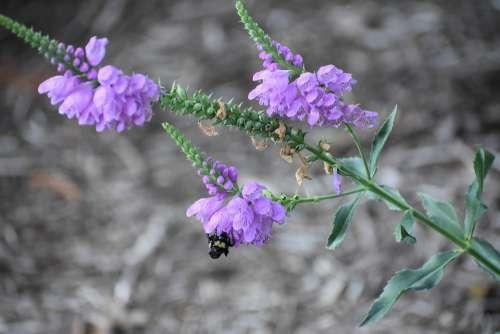Bee Pollen Nectar Nature Bloom Blossom Garden