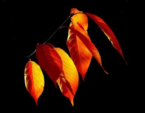 Leaves Autumn Fall Foliage Golden Autumn October