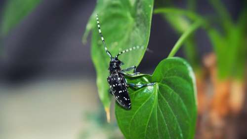 Beetles Insect Plant Green Pets