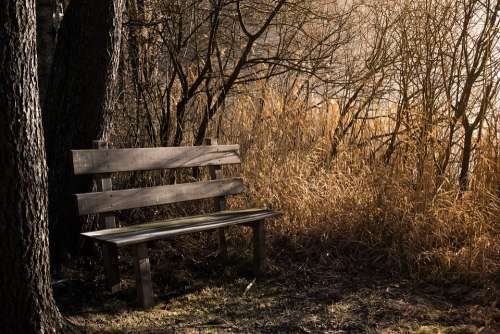 Bench Bank Seat Nature Out Rest Benches Forest