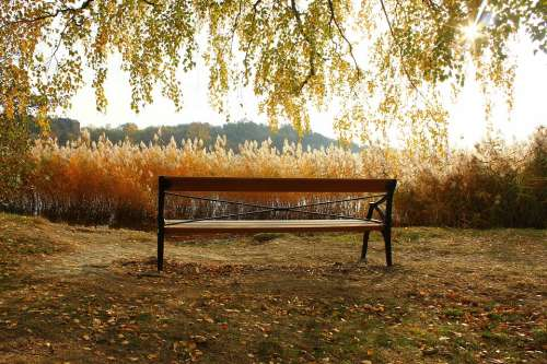 Bench Autumn Nature Park Romantic Rest Stop