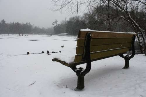 Bench Lake Landscape Duck Sitting Nature Winter