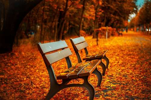 Bench Fall Park Rest Sit Autumn Park Bench Wood