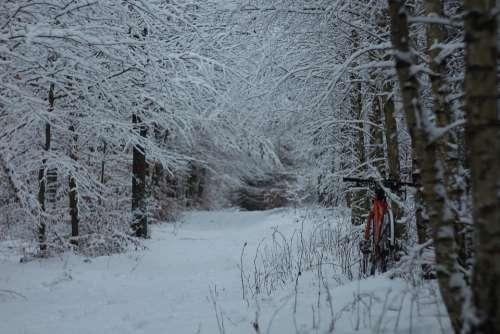 Bike Winter Forest Snow Cold Landscape Tree