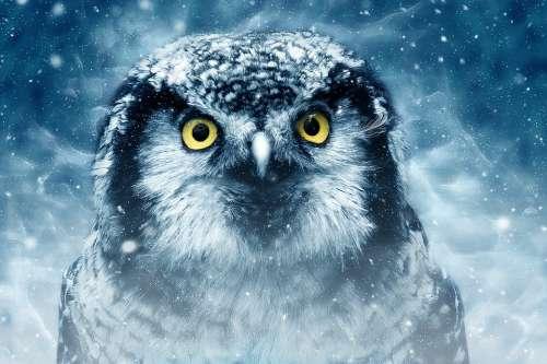 Bird Owl Eyes Animal Looking Nature Wildlife