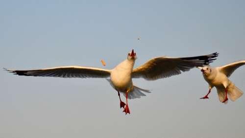 Bird Bird Photography Wildlife Animal Nature