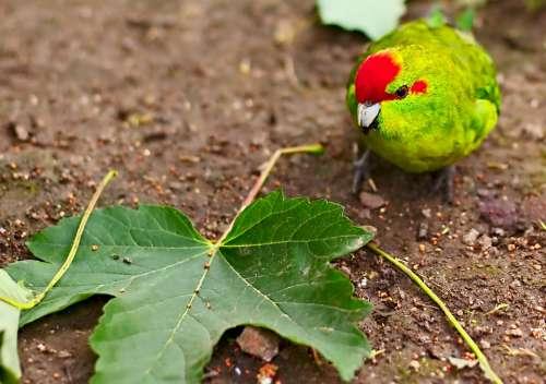 Bird Leaf Animal Animal World Plant Zoo Canary