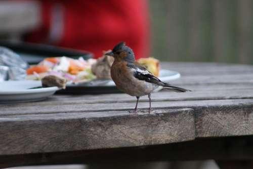 Bird Curious Nature Plumage Feather Colorful