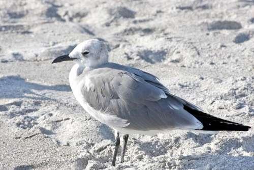Bird Animal Beach Nature Sanibel Florida