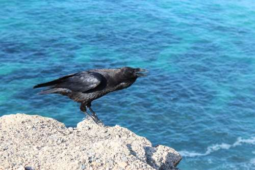 Bird Crow Raven Water Abyss Black Blue Wing