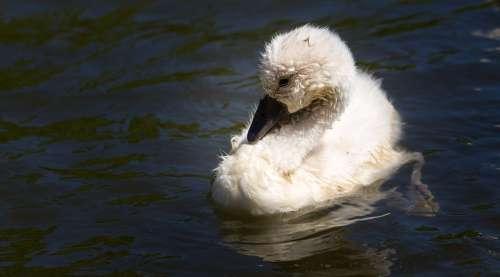 Bird Nature Animal World Plumage