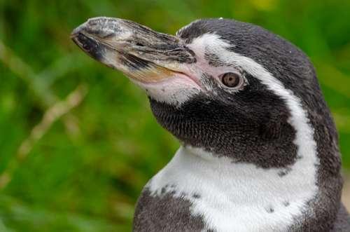 Bird Feathers Plumage Waterfowl