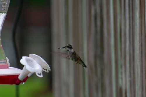 Bird Nature Hummingbird Green Wildlife Wing Small