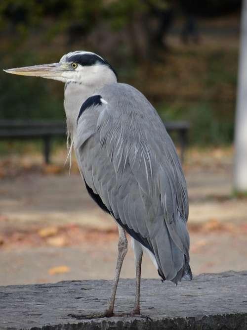 Bird Wildlife Plumage Beak Wings