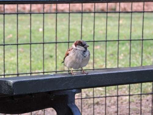 Bird Nature Wings Fly Animals Ave Freedom Flight