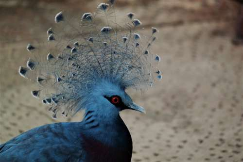 Bird Animal Plumage Feather Animal World