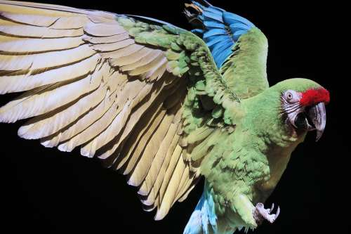 Bird Parrot Plumage Exotic Colorful Animal World