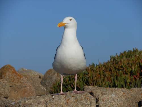 Bird Seagull Wildlife Animal
