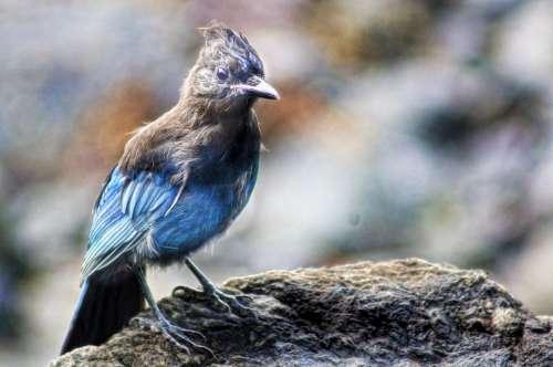 Bird Alaska Nature Animal Wildlife Wild Feather