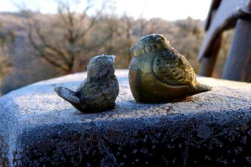 Bird Figures Ice Winter Cold Frozen Birds Ripe