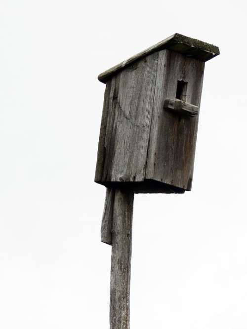 Birdhouse Tree Wooden Birds Jack Nature