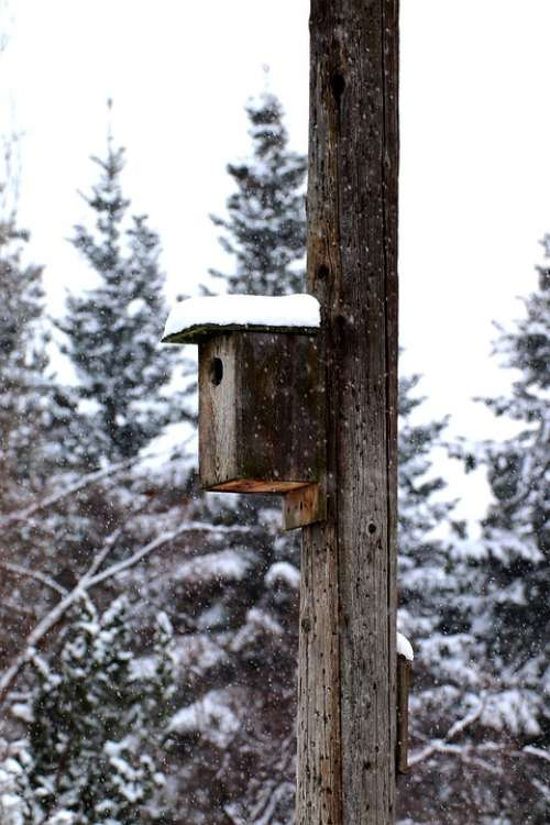 Birdhouse Snow Winter Nature Tree Outdoor