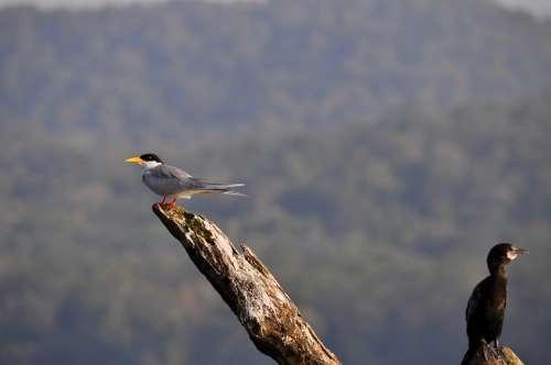 Birds Twig Nature