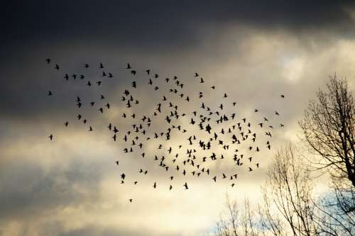 Birds A Bevy Of Covey Silhouette Heaven Sky Light