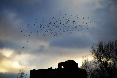 Birds Covey A Bevy Of Silhouette Flying Sky