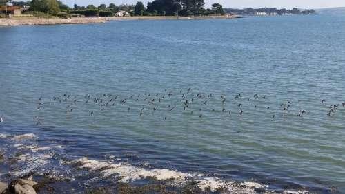 Birds Flying Beach Scenery Lan Landscape Ocean