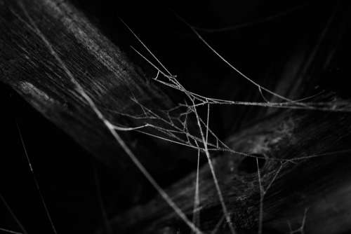 Black And White Frosty Cold Winter Cobwebs Nature