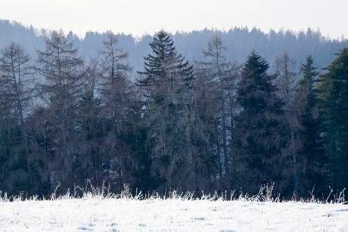 Black Forest Forest Nature Landscape Trees
